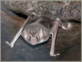 bat removal orlando fl